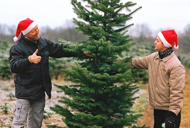 Impressionen Tannenbaum.Tannenbaumschlagen In Reinbek Bei Hamburg