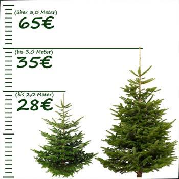 Weihnachtsbaum selber schlagen in hamburg und umgebung